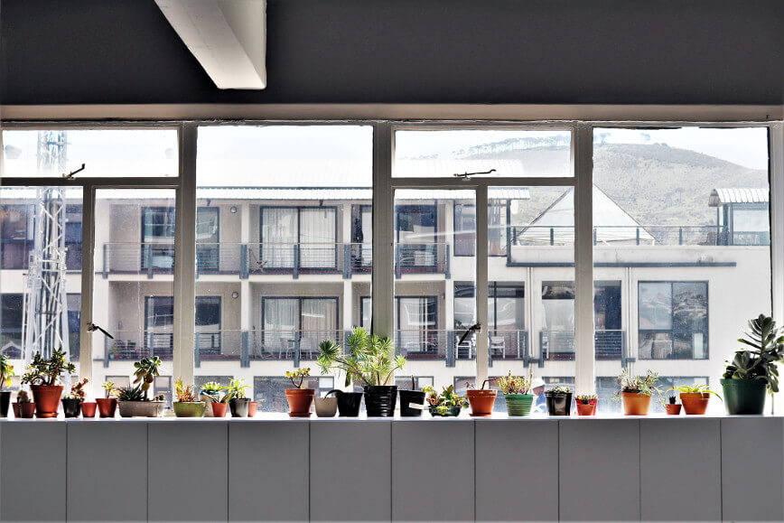 wiele roślin doniczkowych na parapecie - panorama