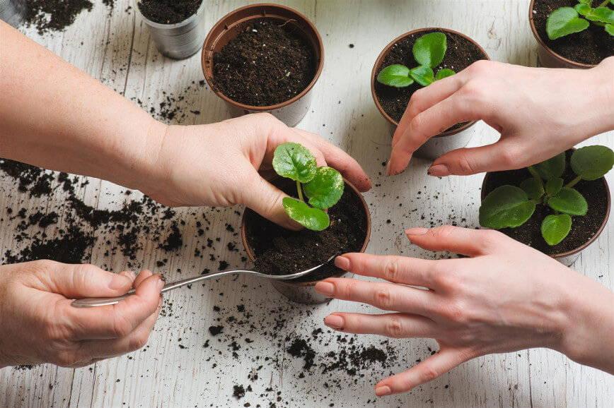 kilka roślin doniczkowych w trakcie sadzenia